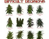 Marijuana shirt, pot, weed shirt, Life is Full of Difficult Decisions  T shirt.Size SM-6XL.Many Colors..