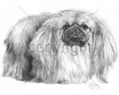 Pekingese Drawing  T shirt..Size SM-6XL.Many Colors