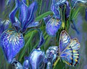 "Bead Embroidery Kit ""Blue Irises"", 10x15"""