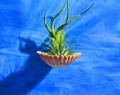 Air Plants, Tillandsia Air Plant Holder, Air Plant Decor, Hanging Air planter