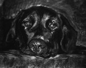 Black Labrador print, Charcoal Lab artwork, Black Lab dog portrait, Labrador dog gift, Dog drawing, Black and white picture, Labrador print