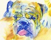 English Bulldog  Wall Art Print Yellow Blue dog watercolor bulldog illustration hand signed bulldog gift idea english bulldog wall art print