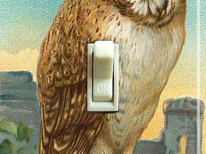 OWL Vintage Art Switch Plate (single)
