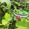 """Exclusive collar for dog from """"Beauty of Nature"""" collection"""