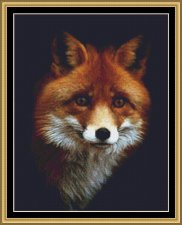 THIS IS A RED FOX  14ct Cross Stitch Kit with sorted 100% cotton threads on Black Aida